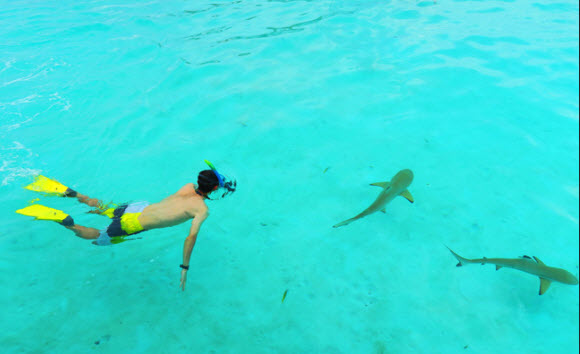 Feeding-the-Shark-Tahiti-Vacation-package-all-inclusive
