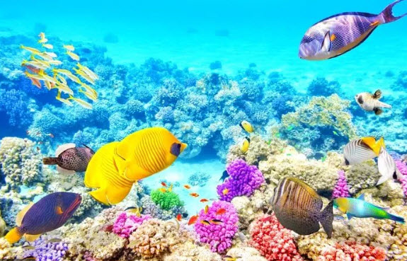 The-Great-Barrier-Reef-of-Australia