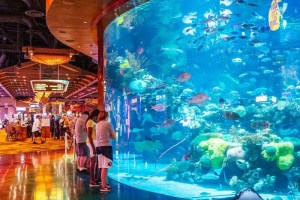 Things-To-Do-In-Las-Vegas-On-The-Strip-at-atlantis-aquarium