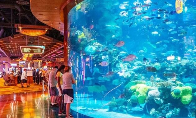 Things-To-Do-In-Las-Vegas-On-The-Strip-at-atlantis-aquarium
