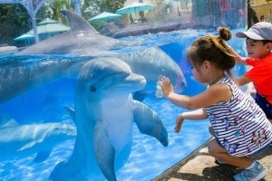 Things-To-Do-In-Orlando-Florida-With-Kids-Seaworld-Orlando