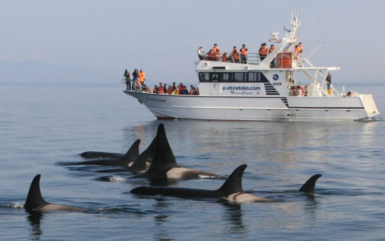 San Diego Whale Watching Season