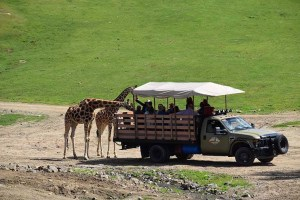 San Diego Zoo Safari Park California