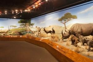 Las Vegas Culture Facts - The Las Vegas Natural History Museum