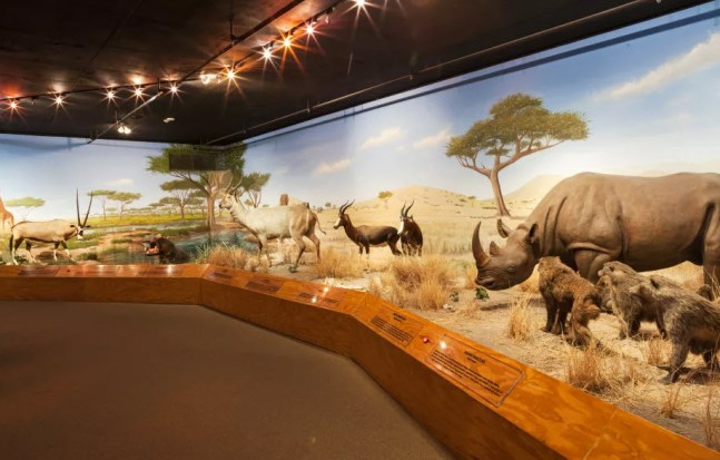 Las Vegas Culture Facts - The Las Vegas Natural History Museum