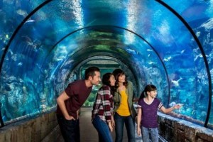 Things To See In Las Vegas - Mandalay Bay Shark Reef