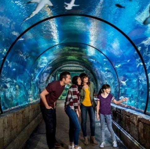 Things To See In Las Vegas - Mandalay Bay Shark Reef