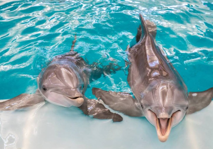 St Petersburg Beach Things To Do - The Clearwater Marine Aquarium