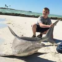 Captiva:  Sandbar Sharks In Redfish Pass