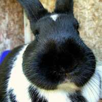 Captiva Bunny Rabbit Scare Of 2013 Appears To Have Passed
