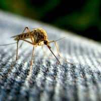Sanibel: Zika Virus Not Projected To Have Big Impact In Florida