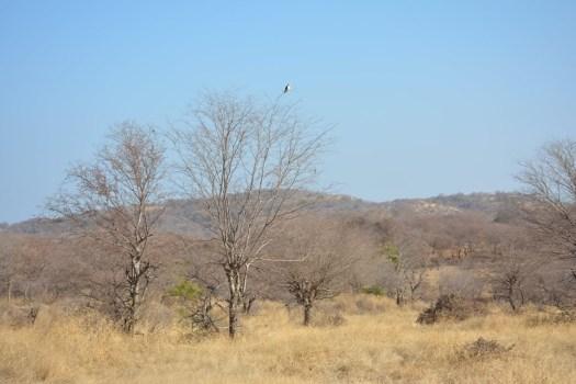 Ranthambore jungle view