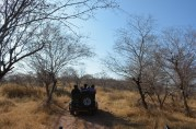 Safari on Gypsy...
