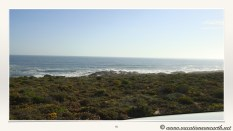 South Africa West Coast - Drive from Houthoop through the Namaqua and Skilpad National Park towards Cape Town.059