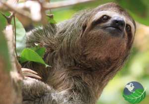 where to go in costa rica for nature sloth