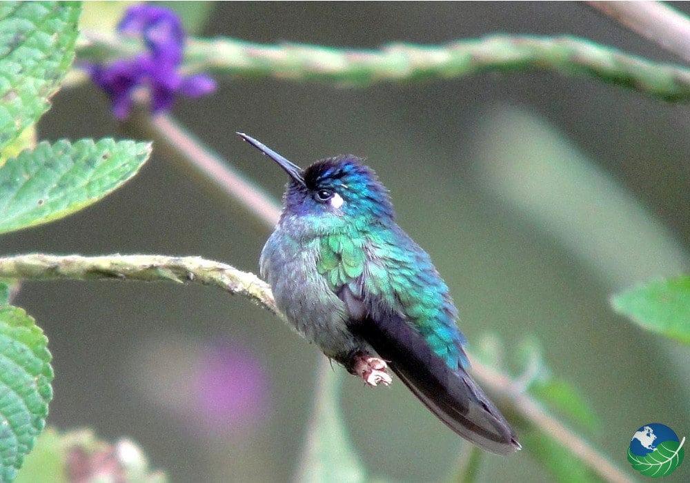 Orosi Bird