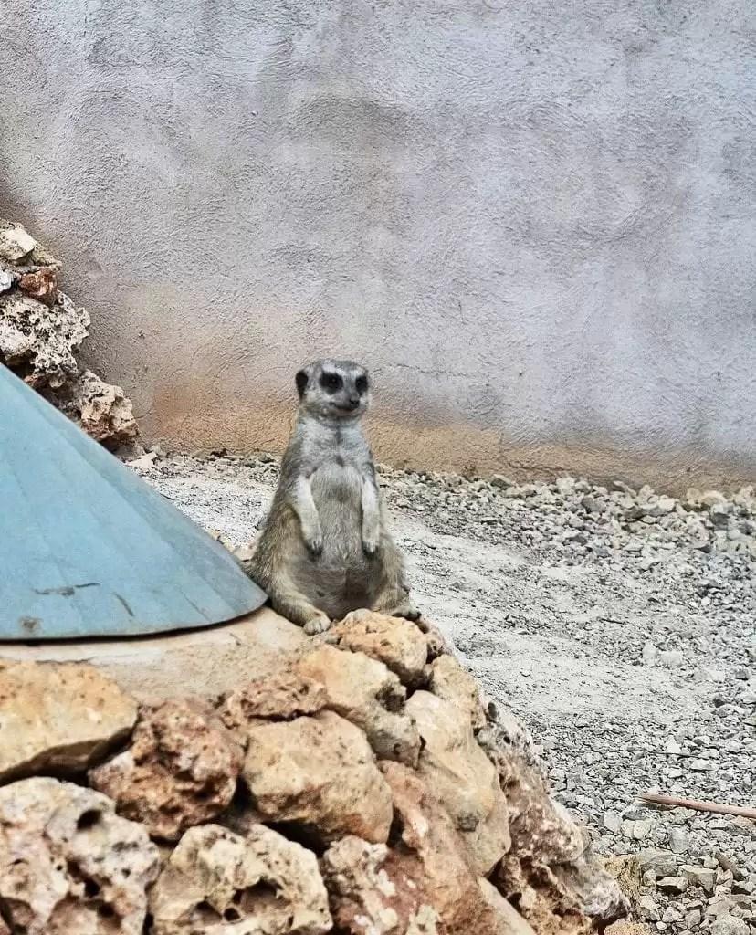 safari zoo, mallorca