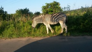 Five Of The Best Things To Do In Mtunzini