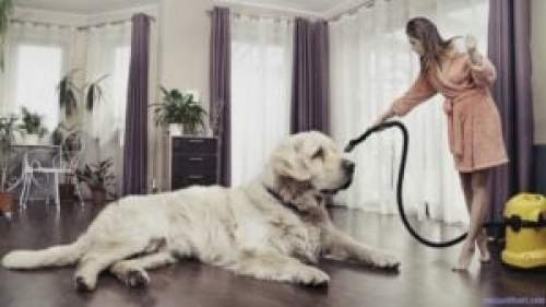 Best Vacuum For Pet Hair Reviews A Comprehensive Buying Guide