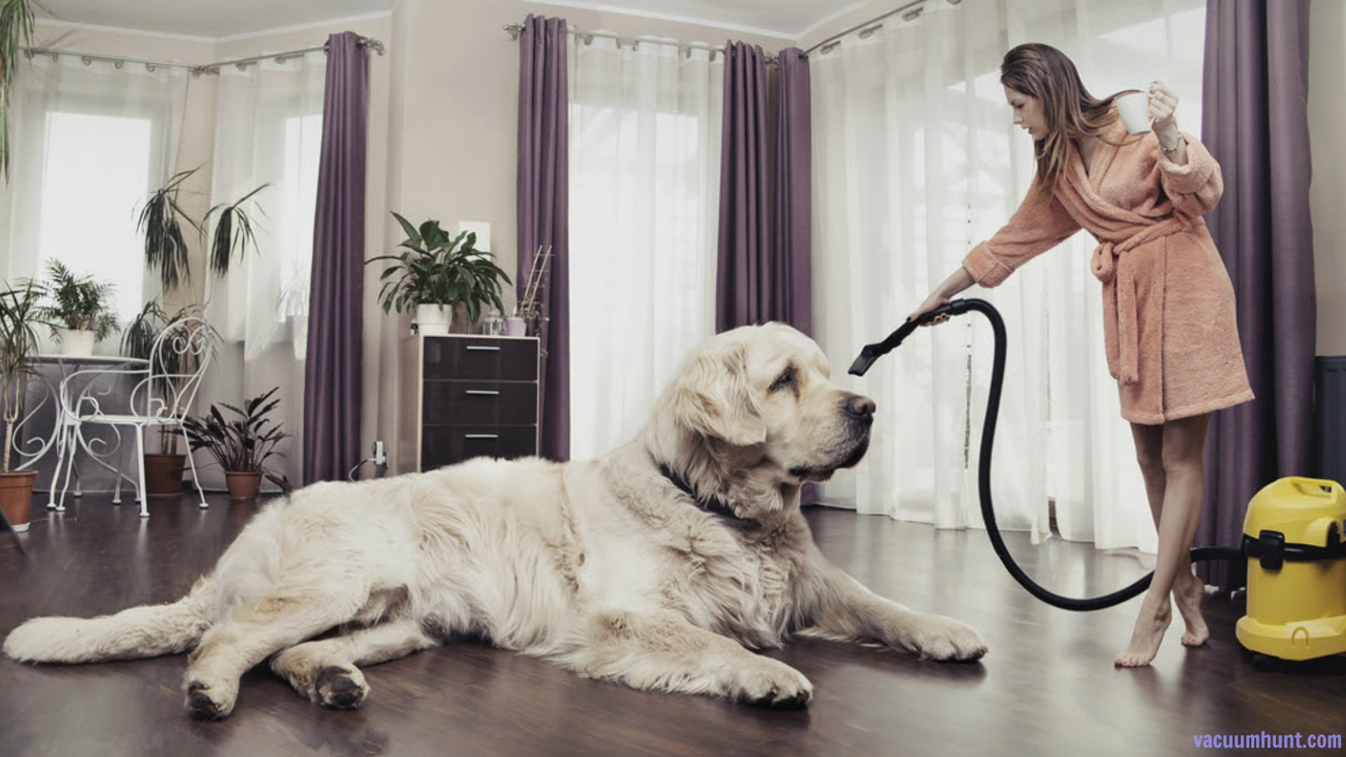 Best Vacuum For Pet Hair Reviews A Comprehensive Buying