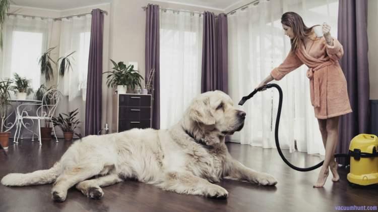 Best Vacuum For Pet Hair