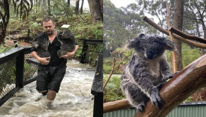Lluvias ayudan a apagar 32 de los 120 focos de incendio en Australia