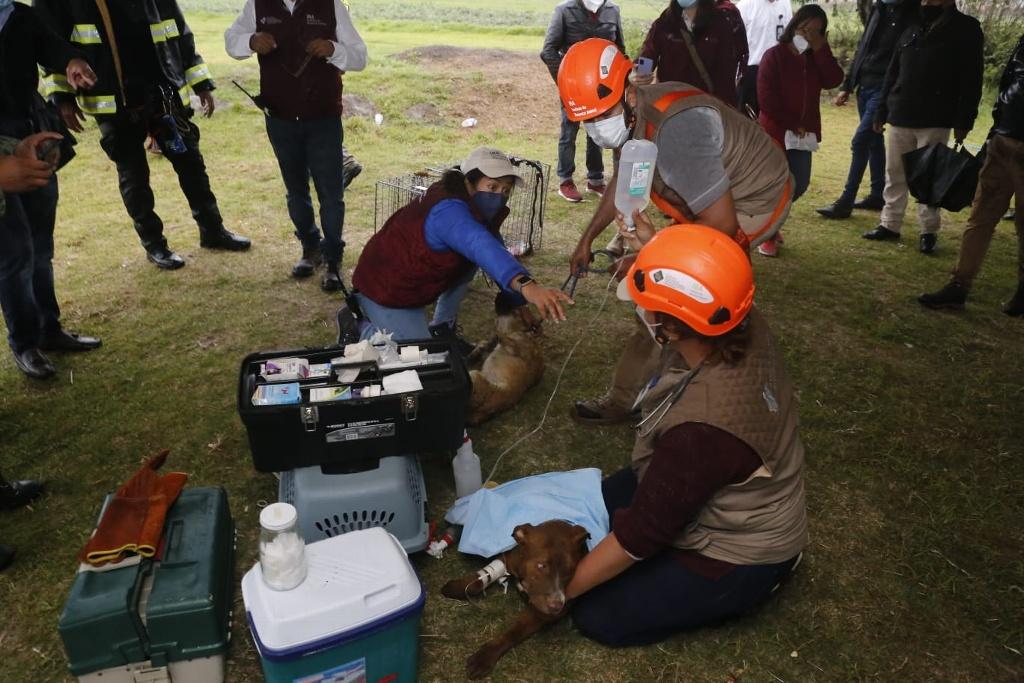 Rescatan a perritos que estaban atrapados en socavón de Puebla