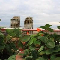 Biodivercity, des jardins sur les toits