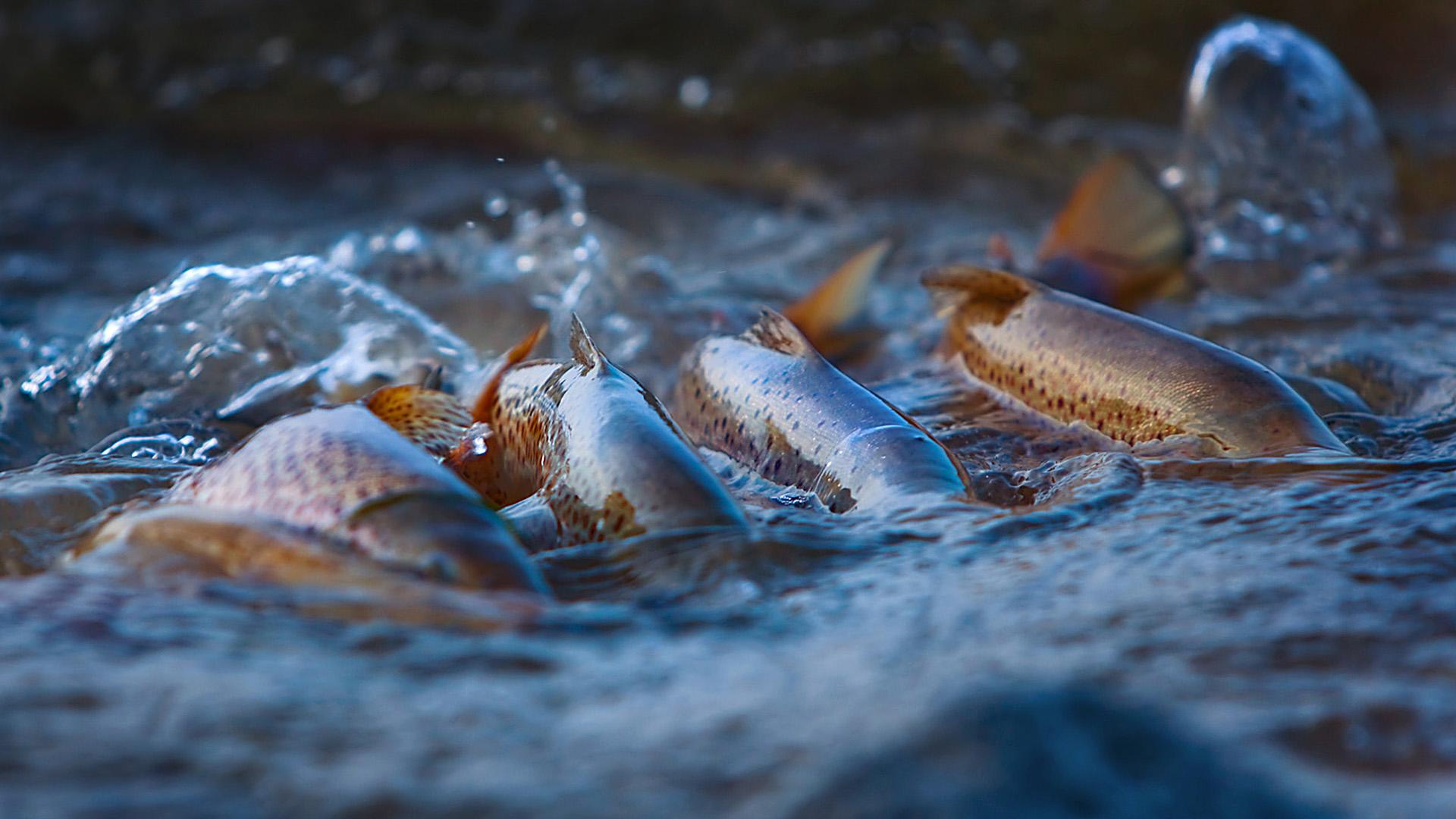 Kestävä kalastus tapahtuu korvien välissä