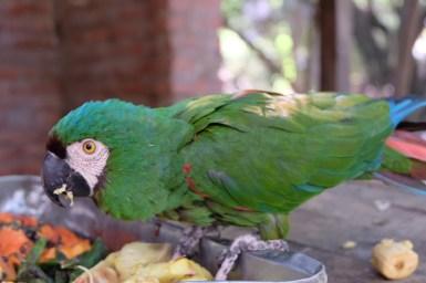 Refuge animalier Jacha Inti