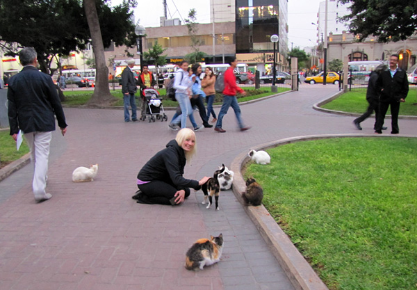 vagablonding 187 Blog Archive 187 Parque Kennedy Cats in Lima