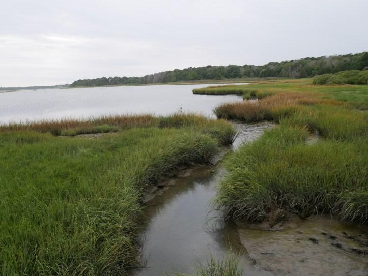 Paysage de marais propice à une flore et faune très riche