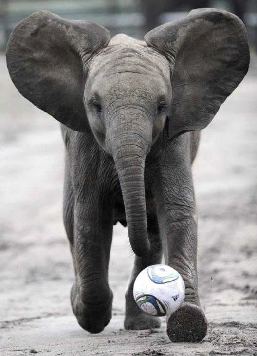 Soccer player...