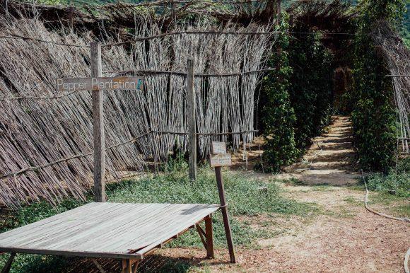 vagabondays-kampot-cambodia-40