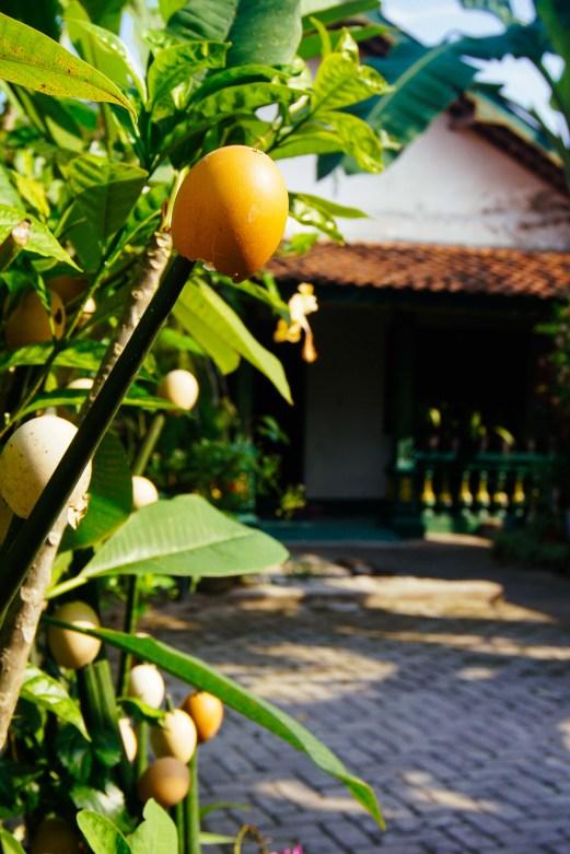 Vagabondays-Yogyakarta-Indonesia-9