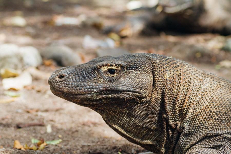 Vagabondays-Komodo-Indonesia-63
