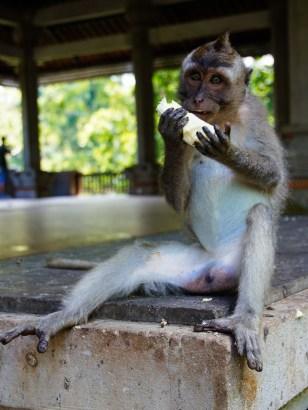 Vagabondays-Ubud-Bali-Indonesia-31