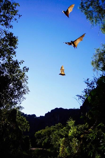 vagabondays-australia-gibb-river-road-71