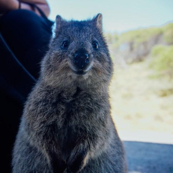vagabondays-rottnest-australia-30