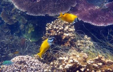 Coral Island Tioman Malaysia 5