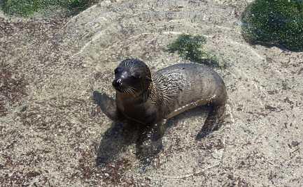 voyage aux Galápagos bébé lion de mer