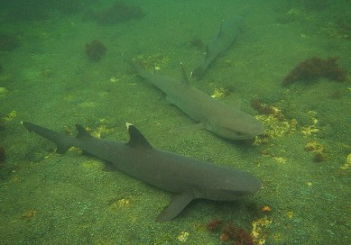 voyage aux galapagos requin2