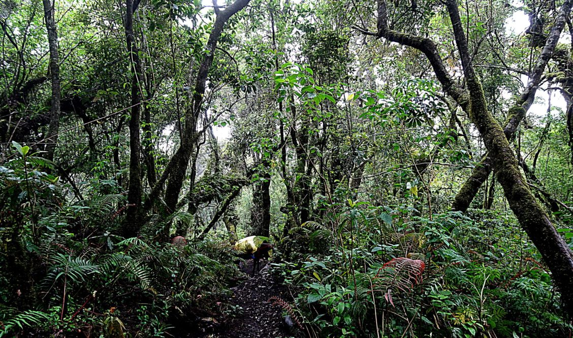 Ascension du volcan Acatenango cloud forest