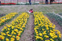Tulip Garden inspires a many photographers