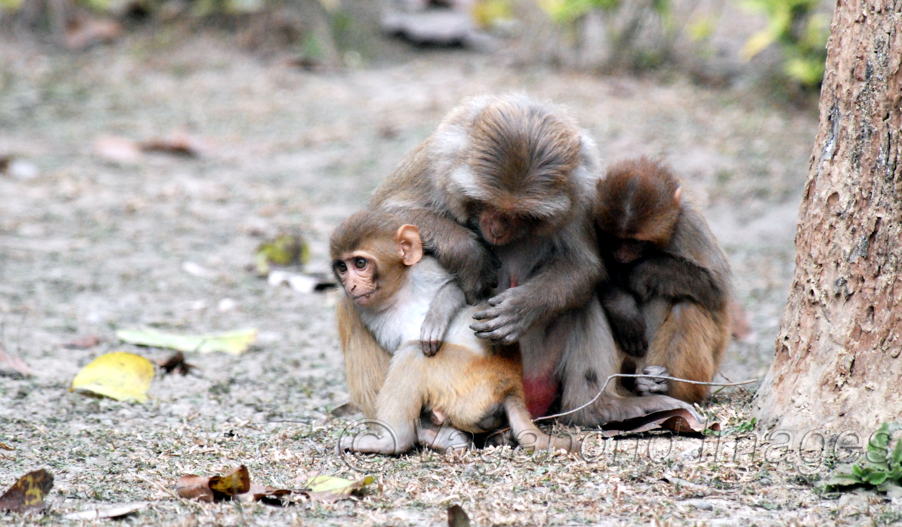 A monkey family enoying some sunshine!