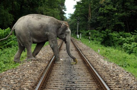 An elephant crossing the railway line passing through sancturay
