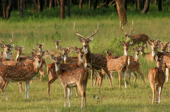 Rich wildlife at Kanha