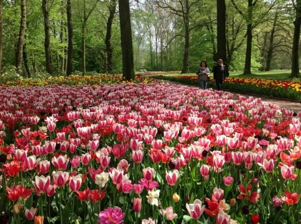Photo: Floralia Brussels