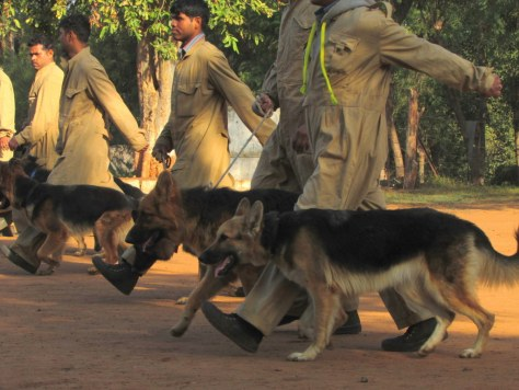 Sniffer_Dogs3