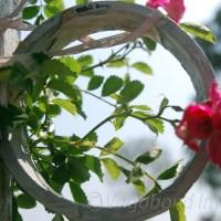 Kausani, through flowers -  A photo story!